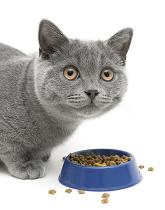 promo-cat1
