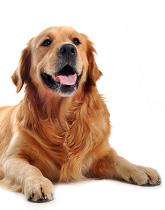 promo-dog1