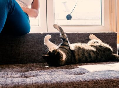KEEP YOUR INDOOR CAT ENTERTAINED